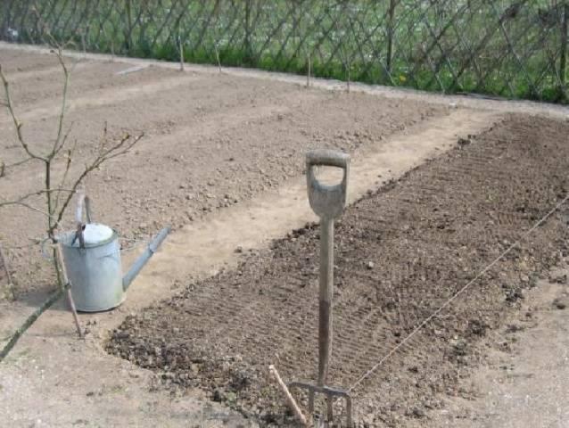 Как правильно подготовить почву для посадки чеснока