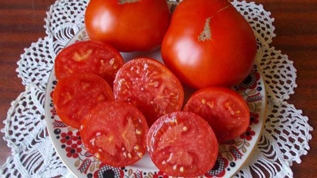 Мал золотник да дорог: чем так хорош томат моногольский карлик