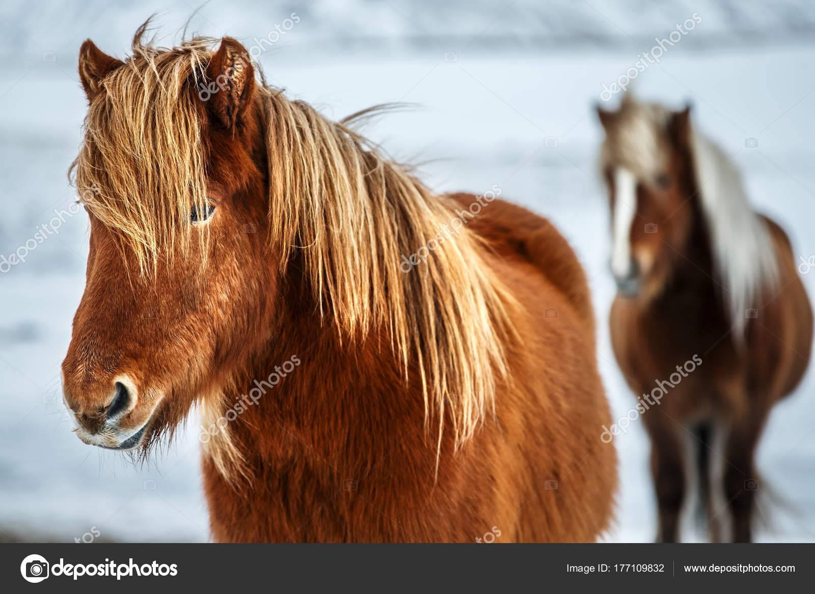 Самые красивые лошади, породистые и редкие виды, описание пород
