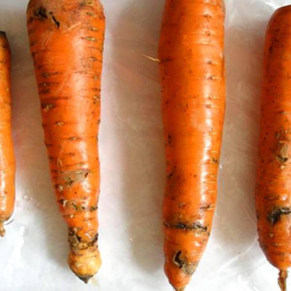 Какие бывают вредители и болезни моркови | cельхозпортал