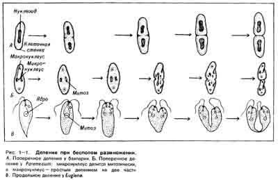 Как грибы размножаются и расселяются