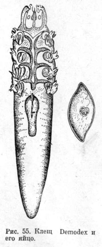Заболевания нижнего отдела конечностей крс