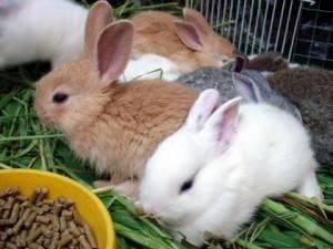 Едят ли кролики лопух: польза для животных, правила и нормы кормления