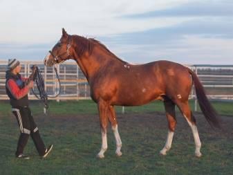 Подбор клички для лошадей по разным параметрам и список запрещенных кличек