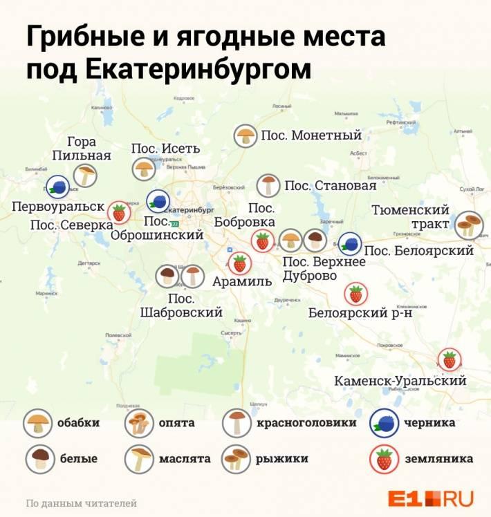 Грибы приморского края 2021: когда и где собирать, сезоны и грибные места