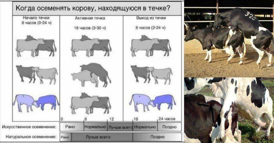 Все, что нужно знать о вязке собак: подходящий возраст, что делать если не получается, правила и советы