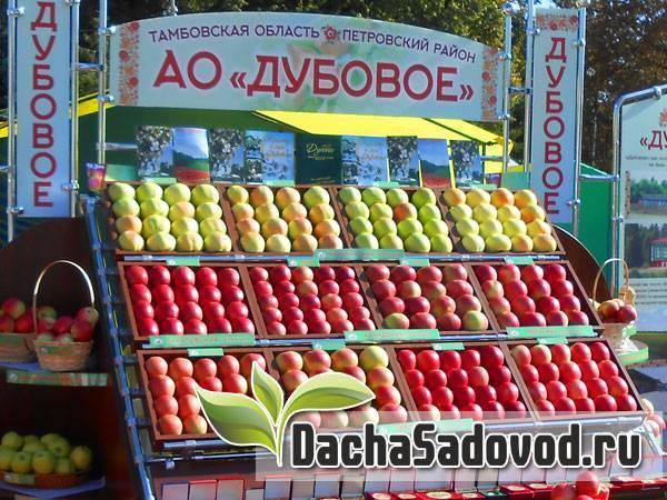 Обзор зимних сортов яблок, хранящихся до весны