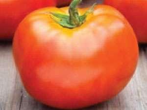 Сорт помидоров белый налив – вкуснее яблок!