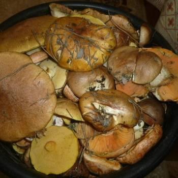 Как заводятся черви в грибах. можно ли сушить червивые грибы? что делать если попался не сильно червивый белый гриб