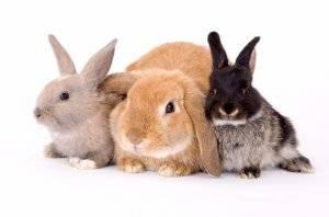 Кролики в домашних условиях: кролиководческая ферма и советы по уходу за кролями (125 фото)