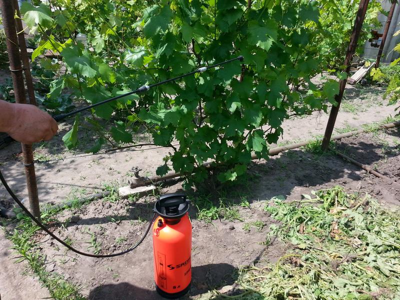 Как обработать виноград железным купоросом весной