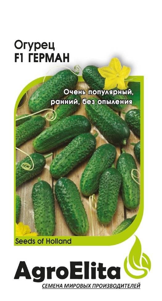 Сорт огурцов герман f1: характеристика, описание с фото, отзывы
