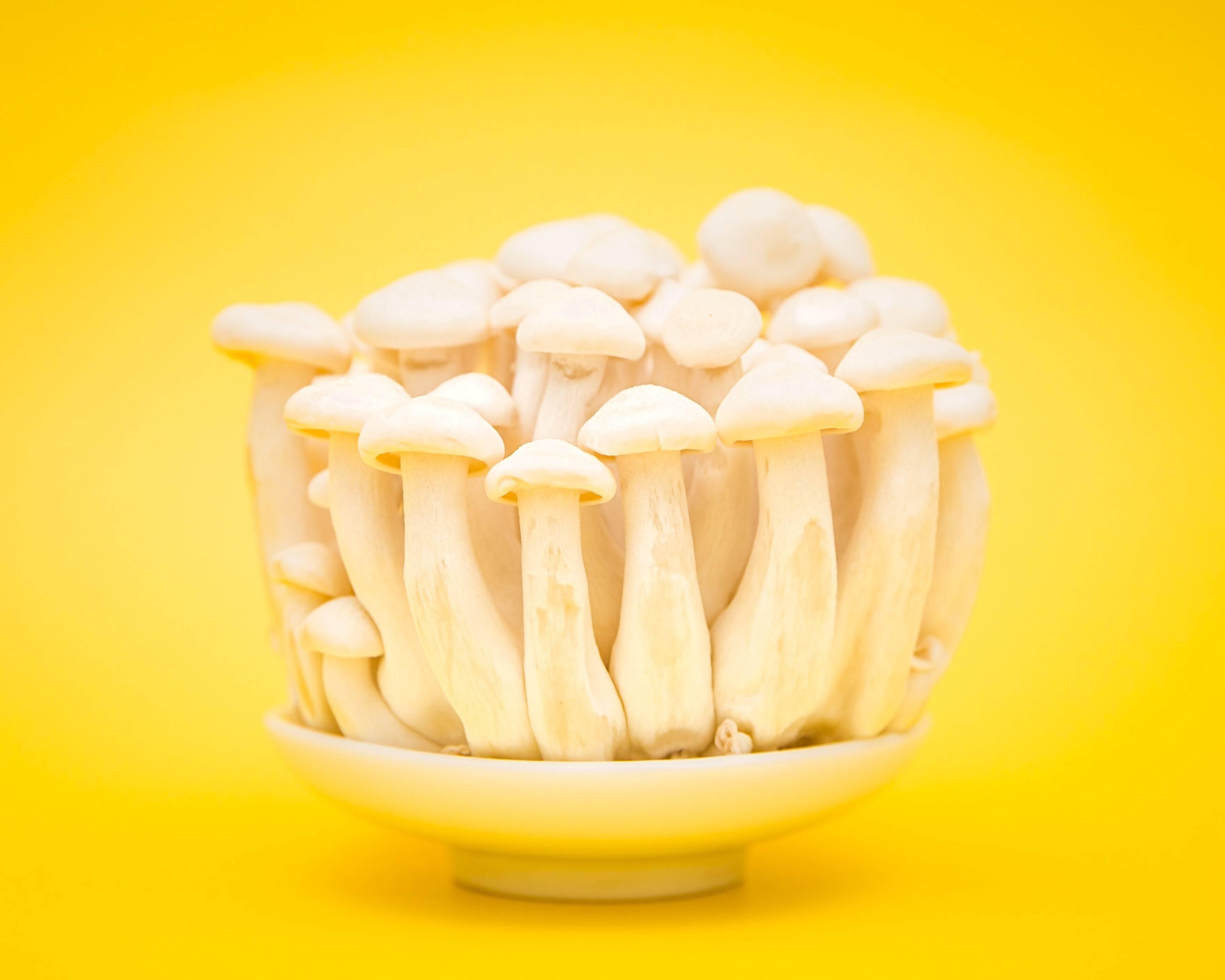 Как заморозить белые грибы: ликбез по заготовкам
