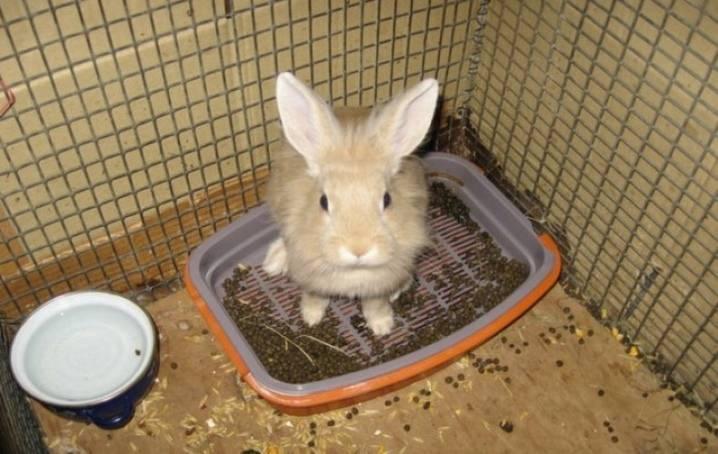 Как приучить кролика ? к лотку: советы и инструкция, выбор лотка