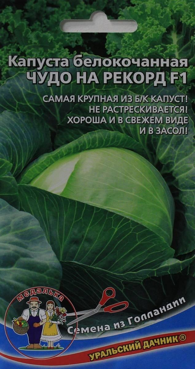 Капуста чудо на хранение f1: описание сорта, отзывы, урожайность