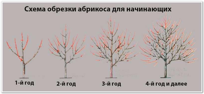 Как и когда нужно обрезать плодовые деревья осенью