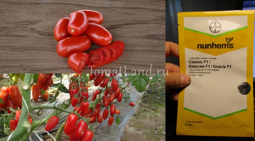 Мой огород 3. моя коллекция крупноплодных томатов - страна мам