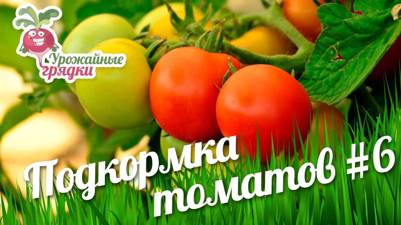 Подкормка помидоров в теплице, к примеру, из поликарбоната: какие удобрения и когда использовать для томатов в первый раз, после высадки и при уходе за цветущими? русский фермер