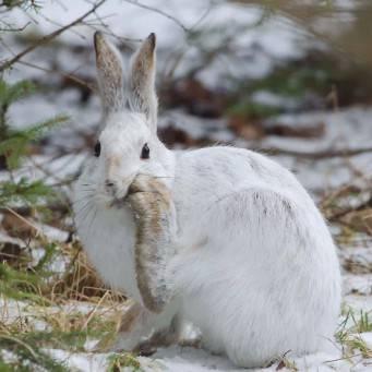 Чем питаются зайцы: что едят