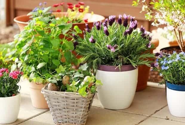 Как правильно развести дрожжи для подкормки растений?