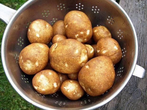 Сорт картофеля «киви» – описание и фото