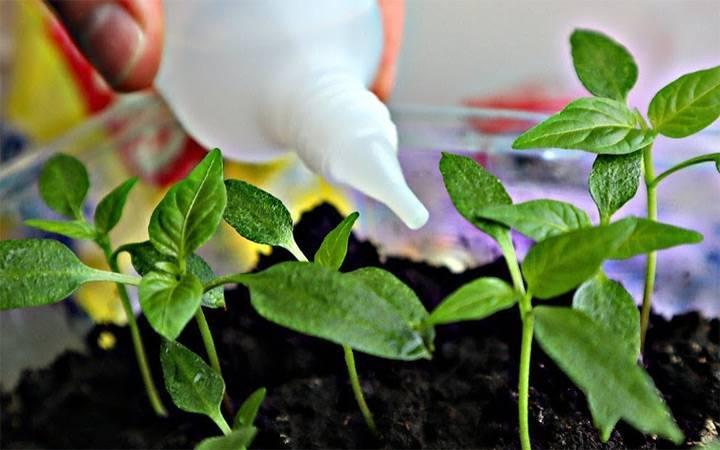 Паутинный клещ на помидорах: как бороться, чем обрабатывать, выбор средства