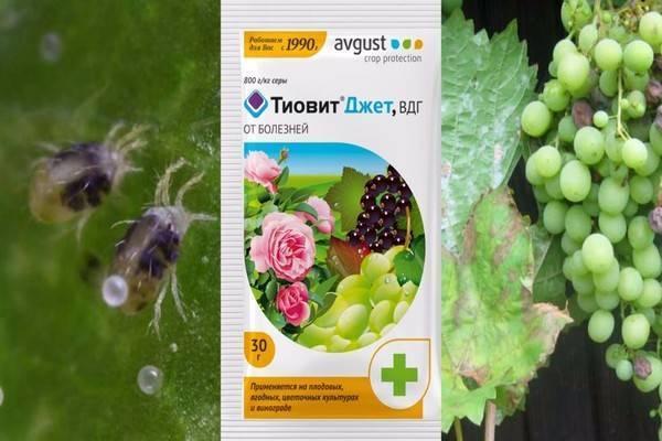 «тиовит джет»: инструкция по применению для винограда, сроки ожидания и дозировки