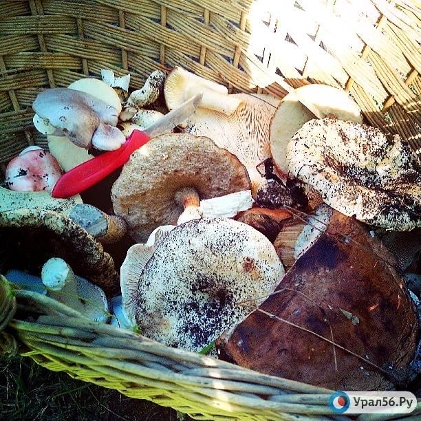 Грибы астраханской области 2021: когда и где собирать, сезоны и грибные места