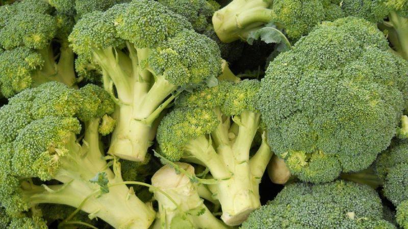 Брокколи: выращивание на огороде, сорта