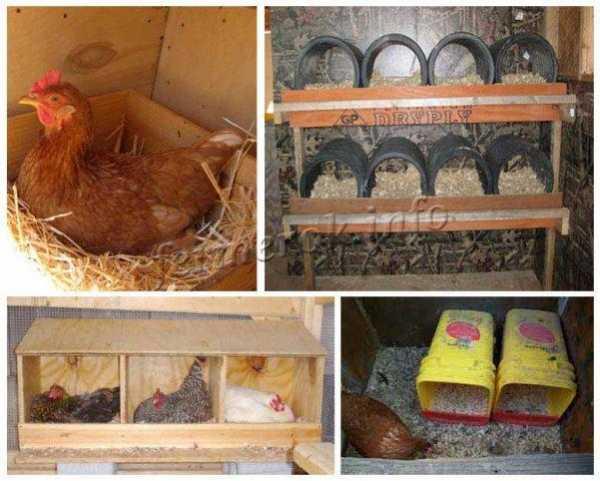 Гнезда для домашних кур: особенности построения, возможные варианты