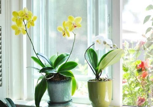 Как поливать орхидею в домашних условиях: особенности и способы полива