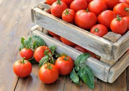 Какие помидоры черри подходят для подмосковья? низкорослые и иные сорта для открытого грунта и теплицы