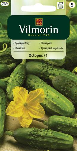 Огурец октопус — описание сорта, фото, отзывы, посадка и уход