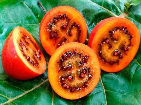 Томатное дерево: уход и выращивание в открытом грунте