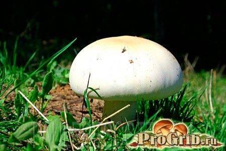 Как вырастить грибы на садовом участке и в огороде