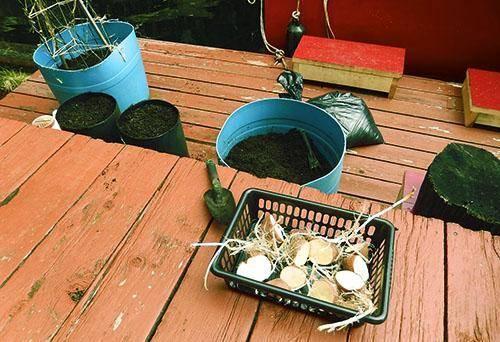 Необычные способы посадки картофеля или как вырастить картошку в бочке на supersadovnik.ru
