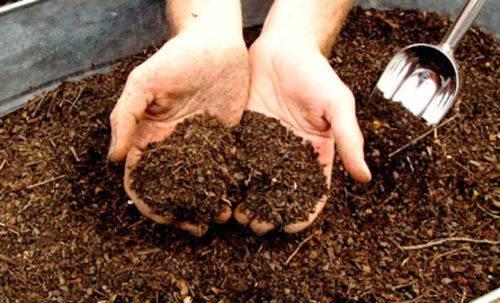 Кроличий навоз как удобрение: состав, применение, что растет