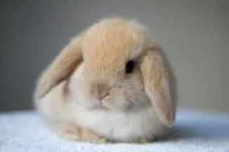 Какую породу кроликов выбрать для домашнего разведения