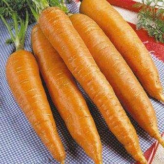 Морковь королева осени: фото, описание сорта, отзывы
