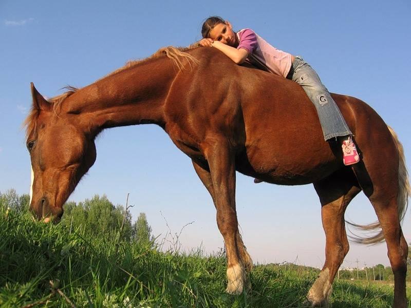 Список основных и редких мастей лошадей