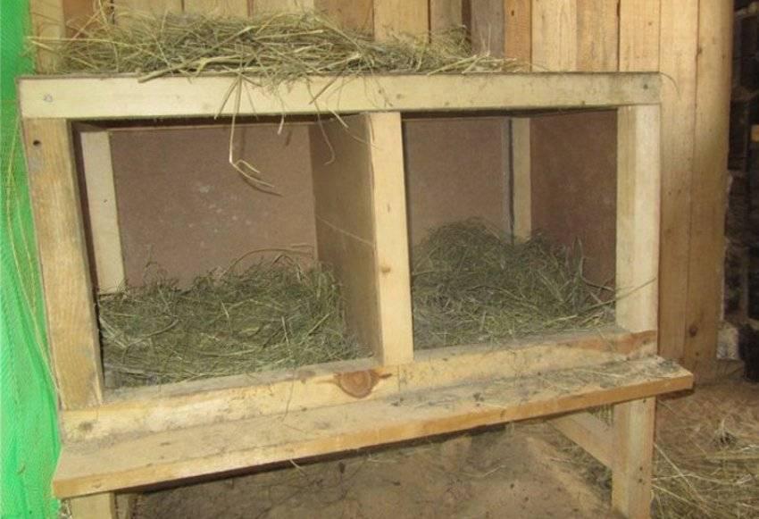 Сарай для индюков: требования к птичнику, материалы и строительство индюшатника