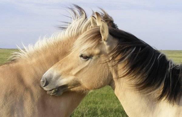 Список красивых кличек для вашей лошади и единорога