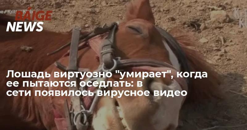 Как правильно управлять и оседлать лошадь и как научиться ездить верхом на конях: фото и видео как правильно управлять и оседлать лошадь и как научиться ездить верхом на конях: фото и видео