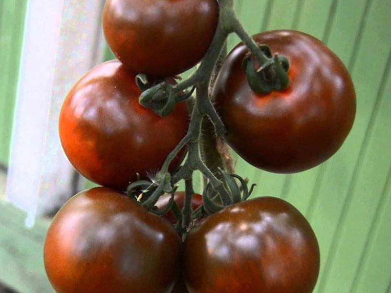 Описание сорта томатов Виагра