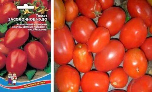 Описание и характеристики сорта томата засолочное чудо, его урожайность – дачные дела