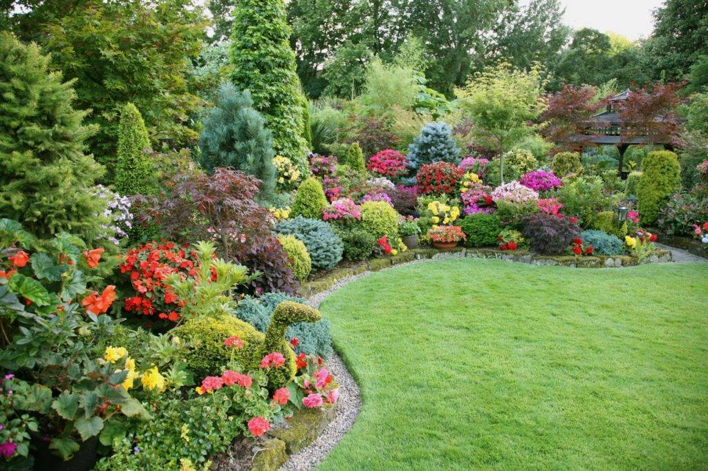 Хвойные растения для сада - создание композиций и правила ухода за хвоей (165 фото)