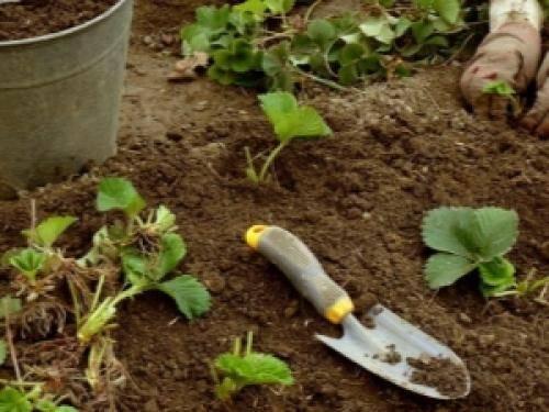 Весенняя подготовка грядок для высокой урожайности
