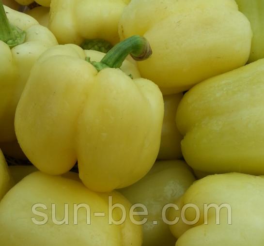 Перец блондин – золотистые плоды в ранние сроки