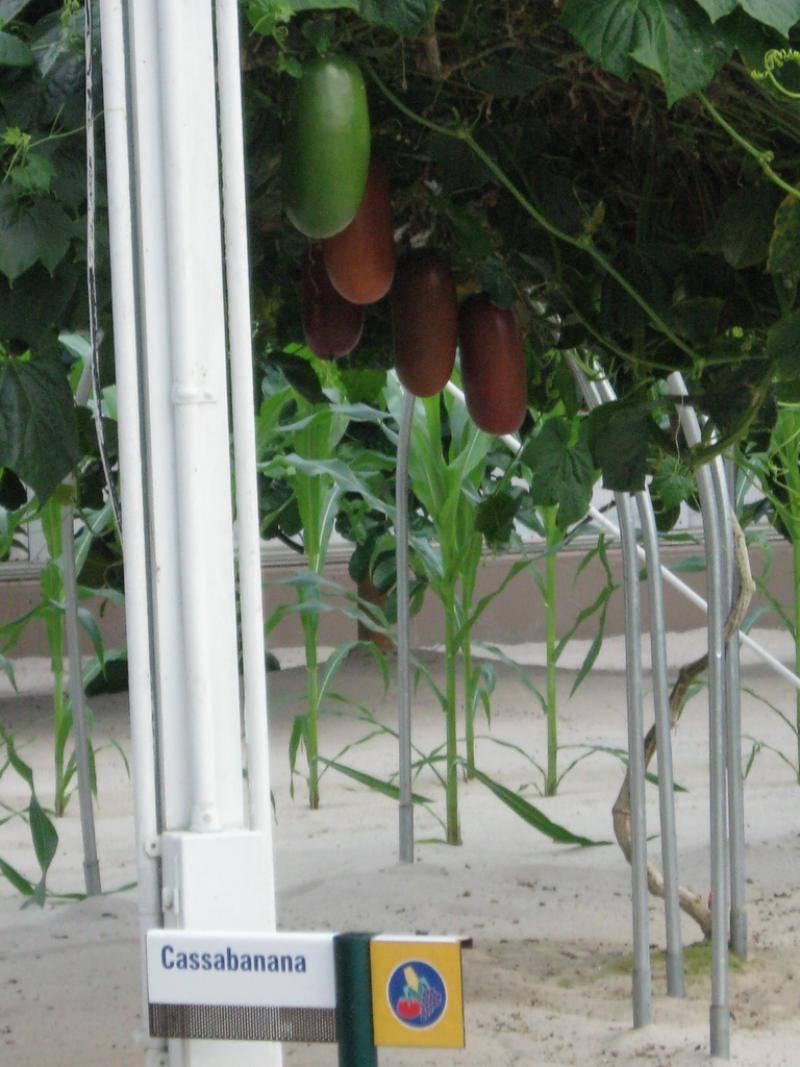 Посадка и уход за брахикомой когда сеять семенами на рассаду фото сортов - самоцветик - медиаплатформа миртесен