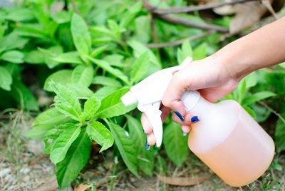 """Уксус от сорняков: эффективность, рецепты (с солью, мылом), когда можно применять - журнал """"совхозик"""""""